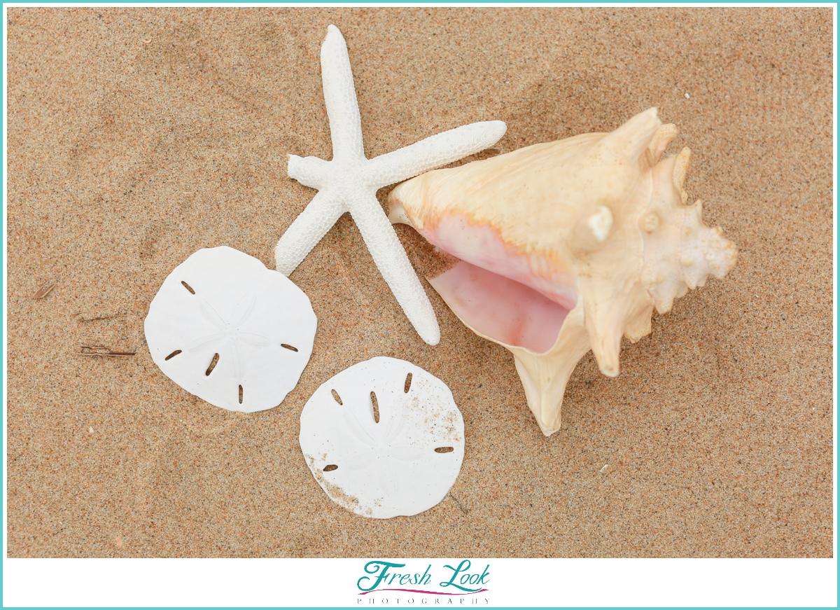 Sand and seashells on the beach