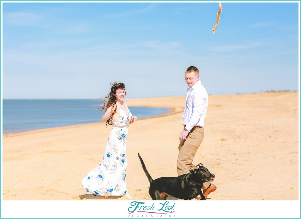 dog photos on the beach