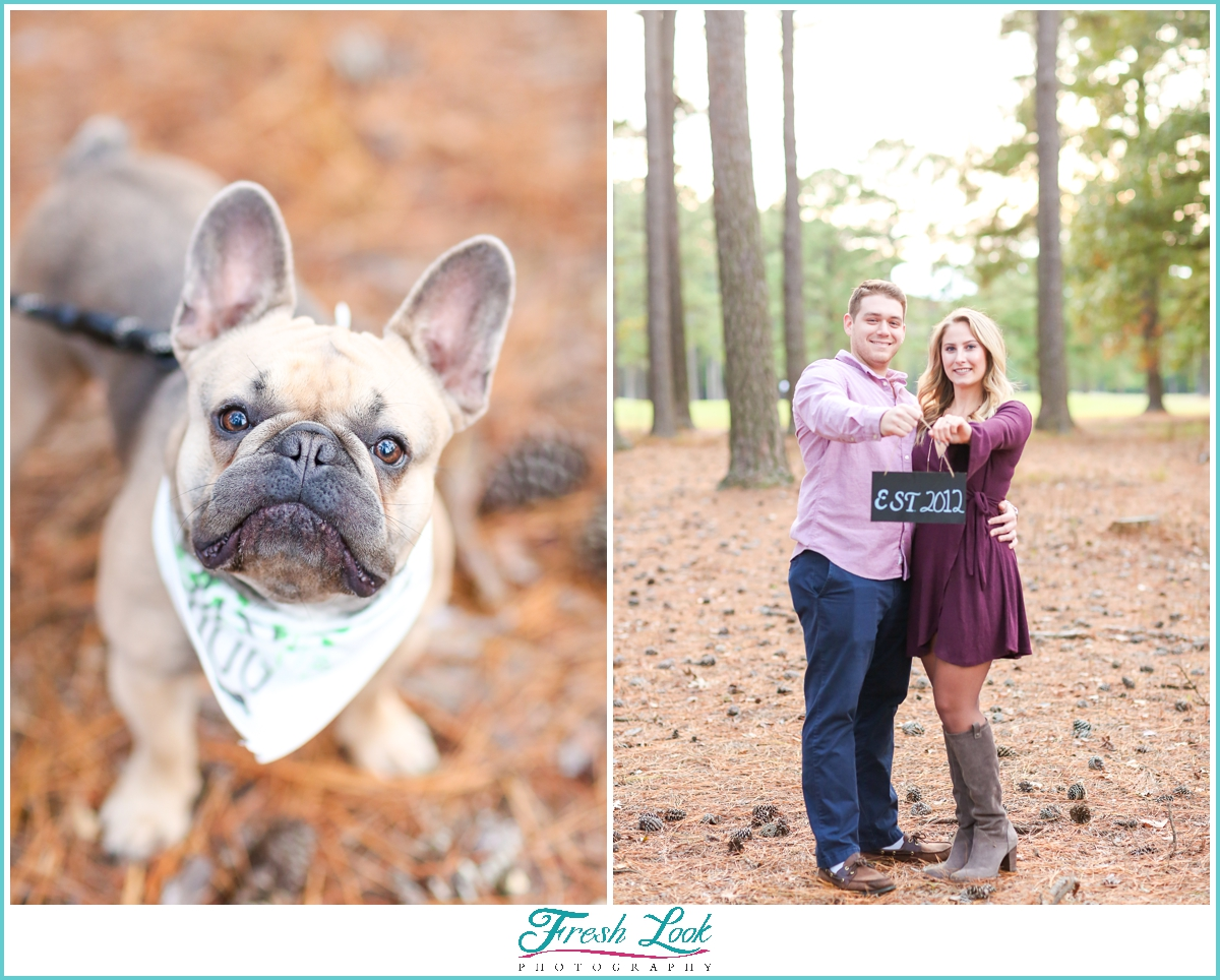 engagement photos with bulldog