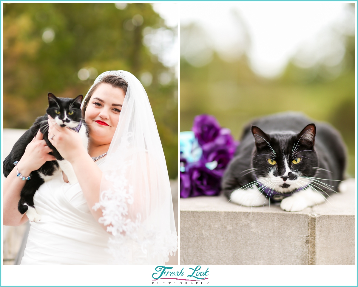 cat and bride photoshoot