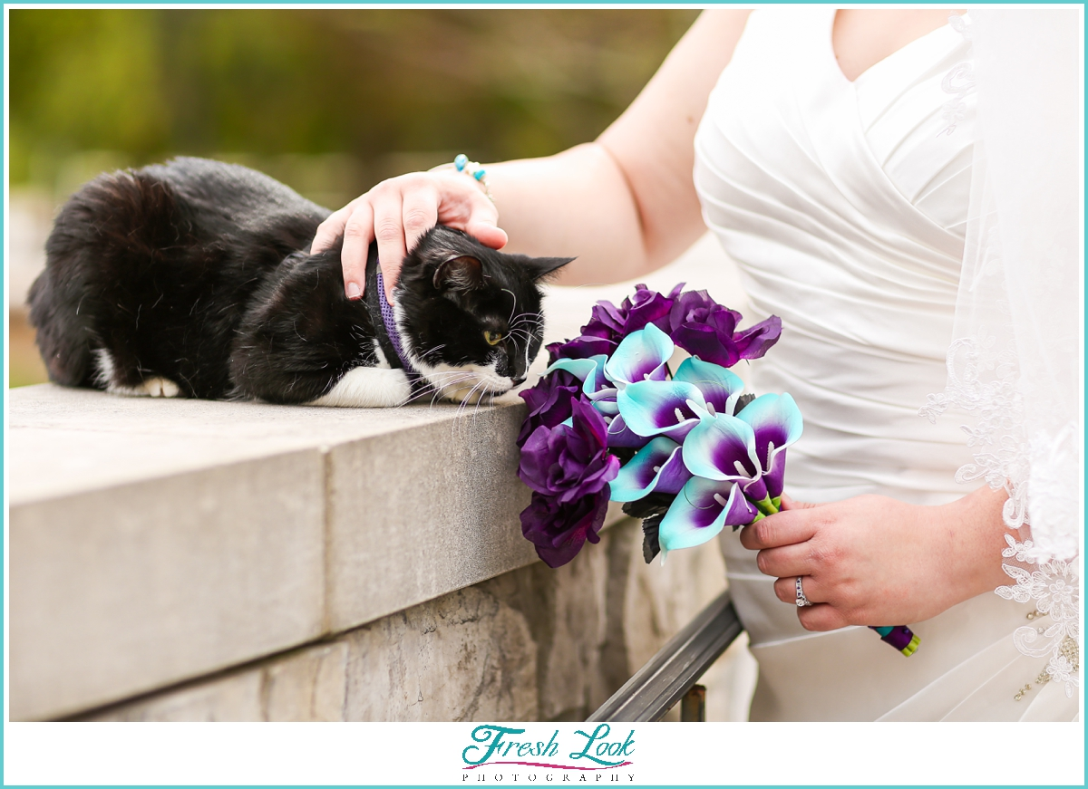 bridal photoshoot with the cat