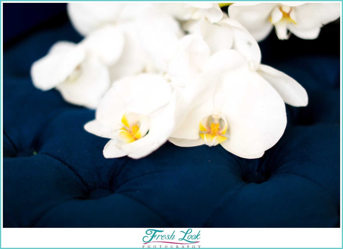orchids on blue velvet