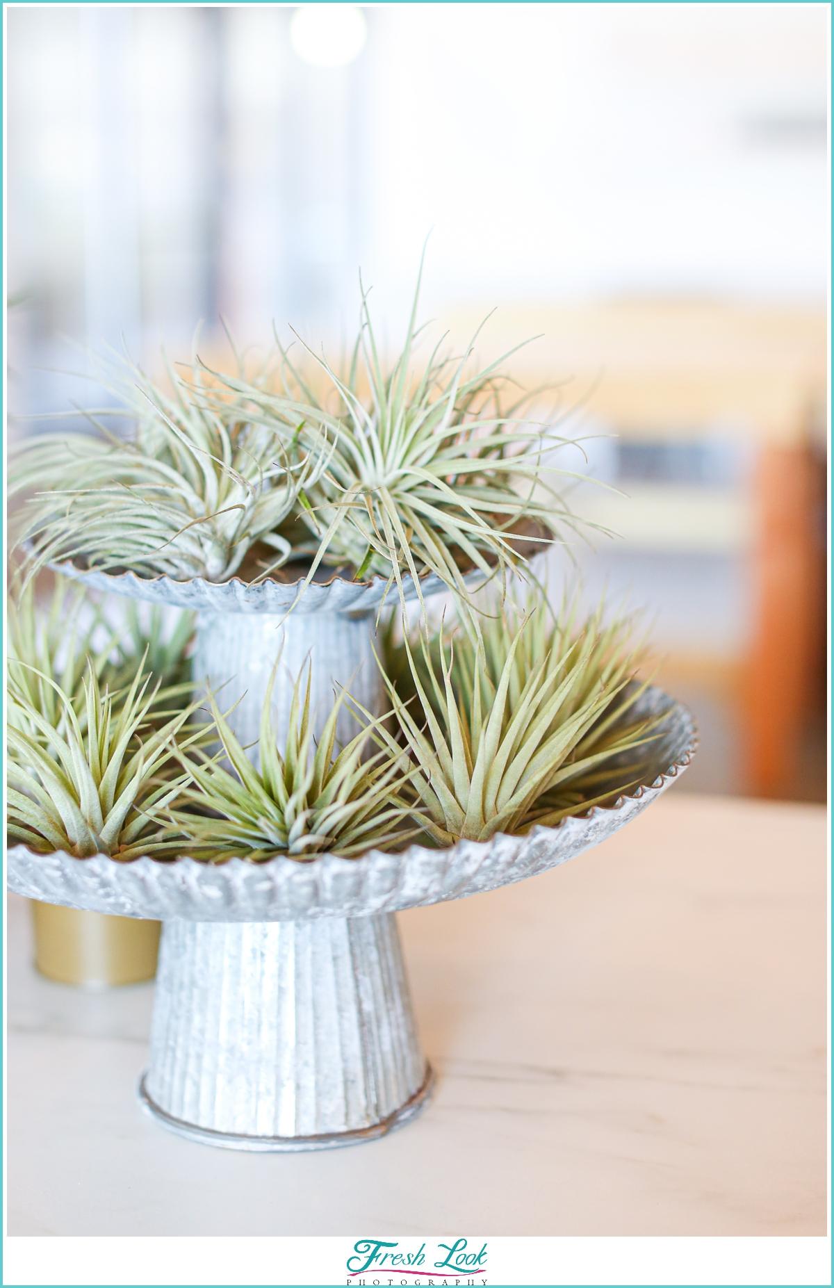 air plant display in plant nursery